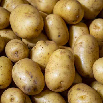 Picture of Salad Mids Potatoes (1kg Wgt)