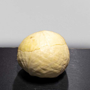 Picture of White Cabbage (8)
