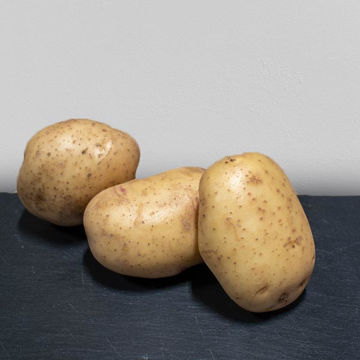Picture of Baking Potato 40s (Each)